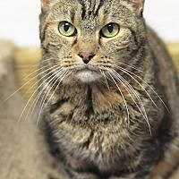 Adopt A Pet :: Mildred170680 - Atlanta, GA