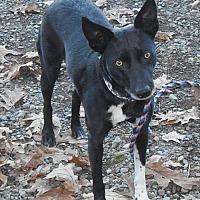 Adopt A Pet :: Daisy (Mona SCAS) - Rockaway, NJ