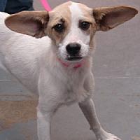 Adopt A Pet :: Nadine - Aurora, IL