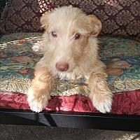 Adopt A Pet :: ELMER - Houston, TX