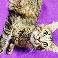 Adopt A Pet :: Lori - Watauga, TX