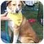 Photo 1 - St. Bernard/Labrador Retriever Mix Dog for adoption in West Los Angeles, California - Tucker
