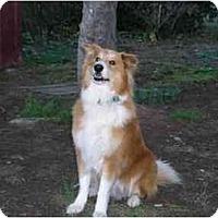 Adopt A Pet :: Mister Teddy - Gardena, CA