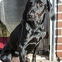 Adopt A Pet :: Betts - Cumming, GA