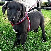 Adopt A Pet :: Kachina LOVES water - Sacramento, CA