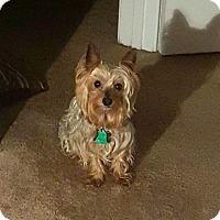 Adopt A Pet :: Brody - Beechgrove, TN