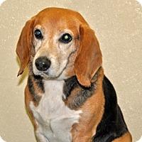 Adopt A Pet :: Walnut - Port Washington, NY