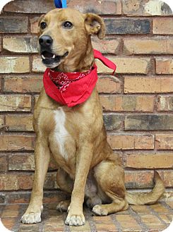 Shepherd (Unknown Type) Mix Dog for adoption in Benbrook, Texas - Charlie