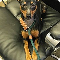 Adopt A Pet :: CHER - Cadiz, OH