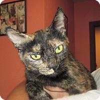 Adopt A Pet :: Cricket - Reeds Spring, MO