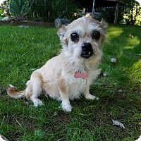 Terrier (Unknown Type, Small) Mix Dog for adoption in Twinsburg, Ohio - Goldie