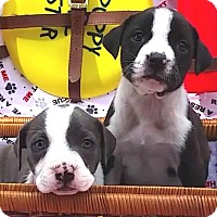 Adopt A Pet :: Flora and Felicia - East Sparta, OH