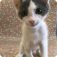 Adopt A Pet :: Heddy - Los Angeles, CA