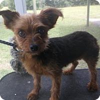 Adopt A Pet :: Queenie - Bonifay, FL