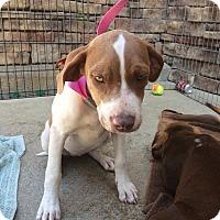 Adopt A Pet :: Heidi - Hohenwald, TN