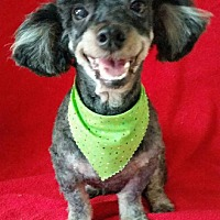 Adopt A Pet :: Caroline - Shreveport, LA