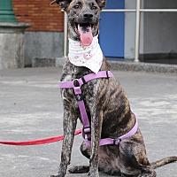 Adopt A Pet :: Mamie - San Mateo, CA