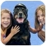 Photo 3 - Rottweiler Mix Dog for adoption in Aldie, Virginia - Smokey