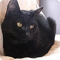 Adopt A Pet :: Cody 2 - Woodland Hills, CA