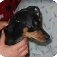 Adopt A Pet :: Bitsy ADOPTED!! - Antioch, IL