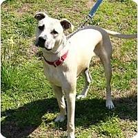 Adopt A Pet :: Beans/Bolt - Mocksville, NC
