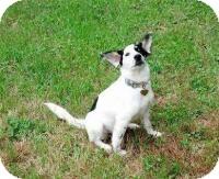 Australian Shepherd Mix Dog for adoption in Mary Esther, Florida - Sophie
