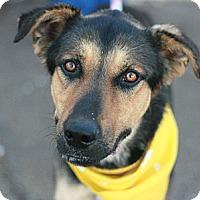 Adopt A Pet :: Bear - Canoga Park, CA
