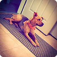 Adopt A Pet :: Vanessa - Scottsdale, AZ