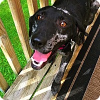 Adopt A Pet :: Susie - Pawling, NY