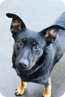 Shepherd (Unknown Type) Mix Dog for adoption in The Dalles, Oregon - Baby