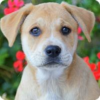 Adopt A Pet :: Catherine von Maysie - Thousand Oaks, CA