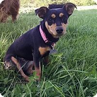 Adopt A Pet :: Laylee - Topeka, KS