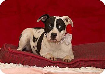 Terrier (Unknown Type, Medium) Mix Dog for adoption in Flint, Michigan - Petey