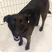 Adopt A Pet :: Ella in CT - East Hartford, CT