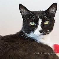Adopt A Pet :: Sofia - Burlingame, CA