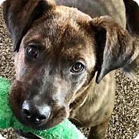 Adopt A Pet :: Karlee - Thousand Oaks, CA