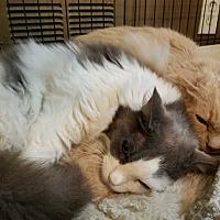 Adopt A Pet :: Jiggs AND Tootsie - Alpharetta, GA