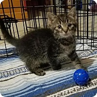 Adopt A Pet :: Myrtle - Parker Ford, PA
