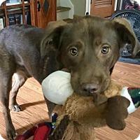 Adopt A Pet :: Dominic - Livonia, MI