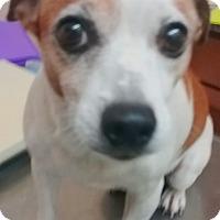 Adopt A Pet :: Jackie - Casa Grande, AZ