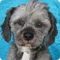 Adopt A Pet :: Brody Bene-Care - Cuba, NY