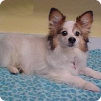 Adopt A Pet :: Jasper - 10 lbs - Dahlgren, VA