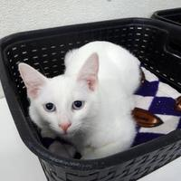Adopt A Pet :: Blizzard - Belleville, MI