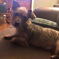 Adopt A Pet :: Sade - Colmar, PA