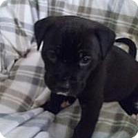 Adopt A Pet :: Cocoa - Marlton, NJ