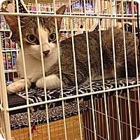 Adopt A Pet :: Muffin - Brooklyn, NY