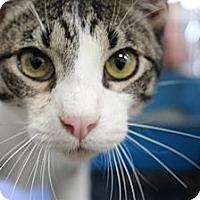 Adopt A Pet :: Toby - Santa Monica, CA
