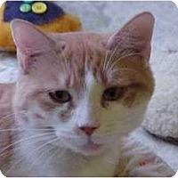 Adopt A Pet :: Mya - Lunenburg, MA