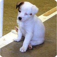 Adopt A Pet :: Puppy 2a - Irvington, KY