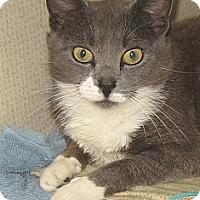 Adopt A Pet :: KATIE - 2015 - Hamilton, NJ